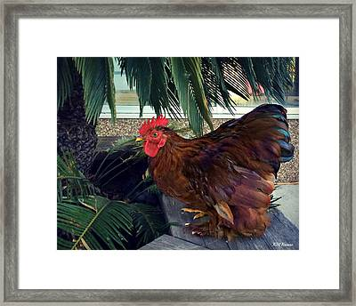 Rooster Under The Palm Framed Print by Kathy M Krause