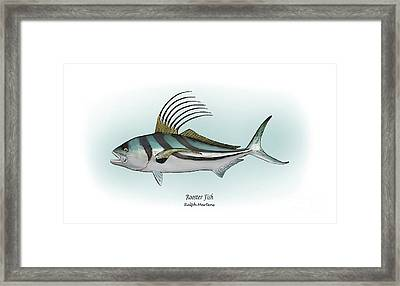 Roosterfish Framed Print by Ralph Martens