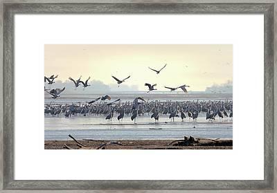 Roosting On The Platte Framed Print