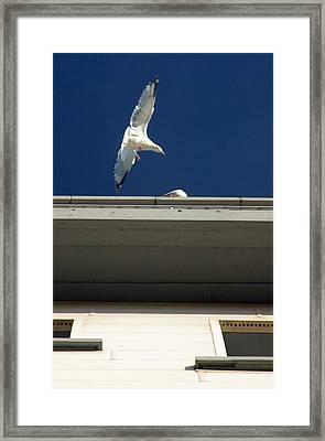 Roosting Time Framed Print by Jez C Self