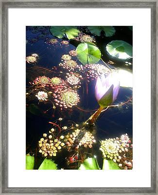 Root Of Beauty Framed Print by Scarlett Royal