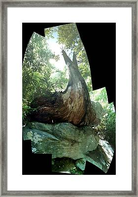 Framed Print featuring the photograph Root Over Rock by John Gibbs