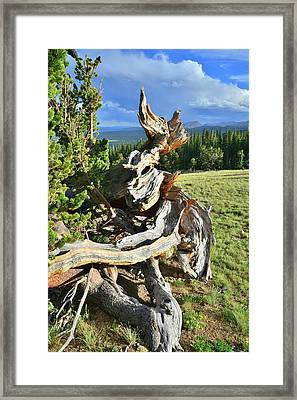Root System Framed Print by Ray Mathis