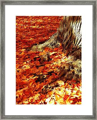 Rooted In New England Framed Print