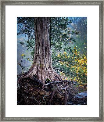 Rooted Framed Print by James Barber