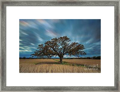 Rooted Waukesha Framed Print