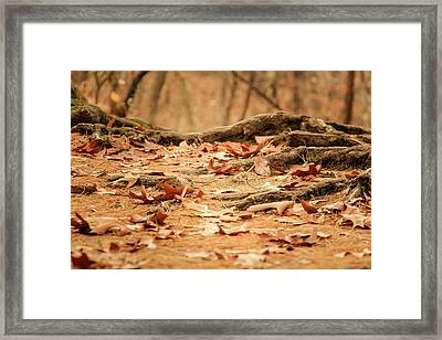 Roots Along The Path Framed Print