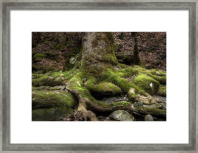 Roots Along The River Framed Print by Mike Eingle