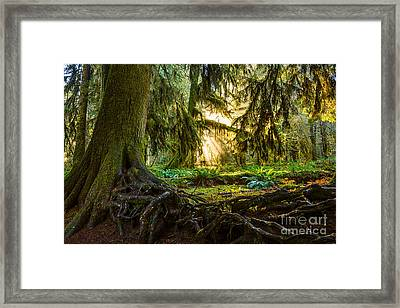 Roots And Light Framed Print