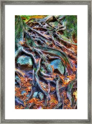 Roots And Rocks Framed Print by Naman Imagery
