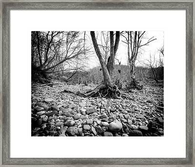 Framed Print featuring the photograph Roots And Stones by Alan Raasch