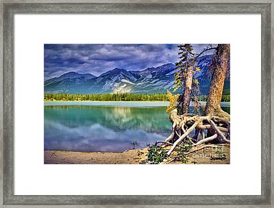 Roots And Reflections Framed Print