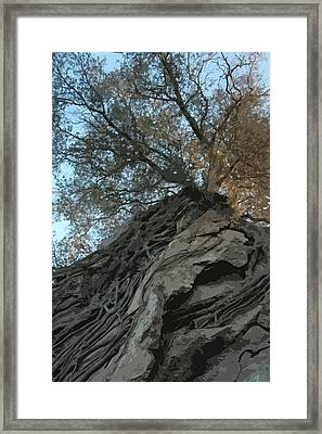 Roots Framed Print by Brigid Nelson