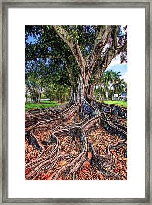 Roots Framed Print by David Lane