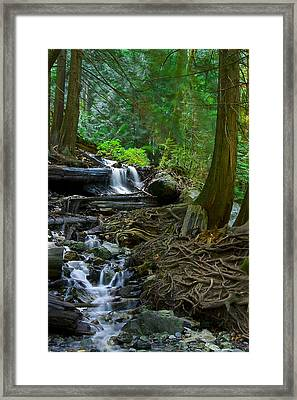 Roots Framed Print