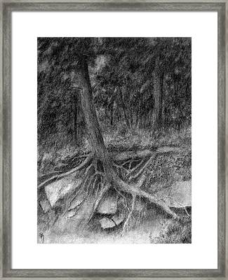 Roots II Framed Print by David King