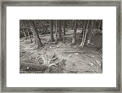 Roots Framed Print by James Steele
