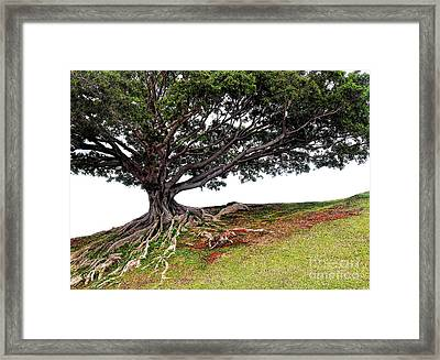Roots Of Honolulu Framed Print by Gina Savage
