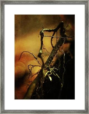 Roots Of Life Framed Print by Rebecca Sherman