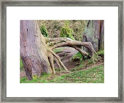 Roots Of Strength Framed Print