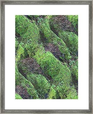 Roots Of The Ages Framed Print by Tim Allen