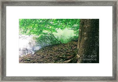 Roots On The River Framed Print