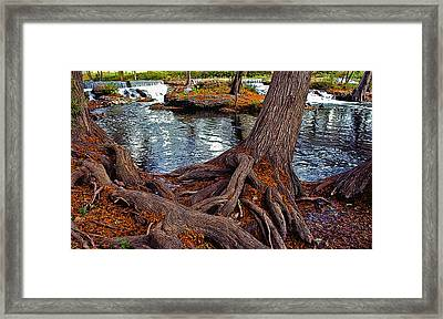 Roots On The River Framed Print by Stephen Anderson