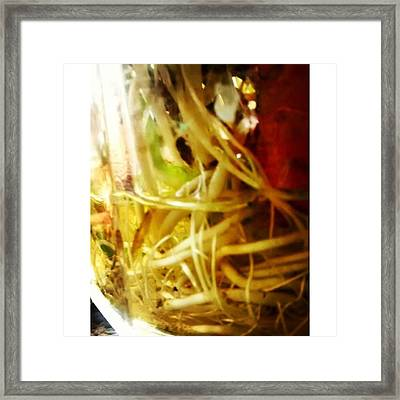 Roots #roots #plants #vegetables #green Framed Print
