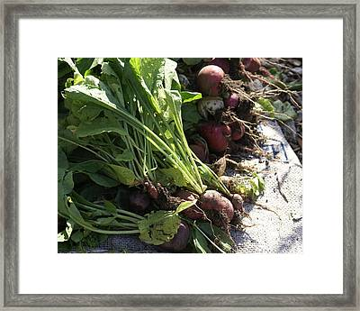 Roots Framed Print by Sonja Anderson