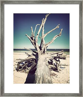 Roots To The Sky-vintage Framed Print by Chris Andruskiewicz
