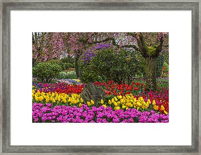 Roozengaarde Flower Garden Framed Print by Mark Kiver