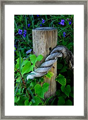Rope And Vine Framed Print by Lyle  Huisken