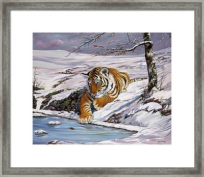 Roque Playing In The Ice Pond Framed Print by Silvia  Duran