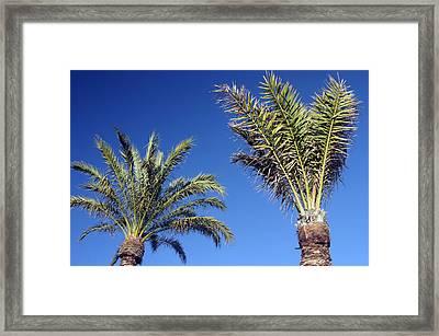 Roquettas 69 Framed Print by Jez C Self