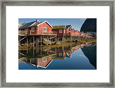 Rorbus With Reflections Framed Print
