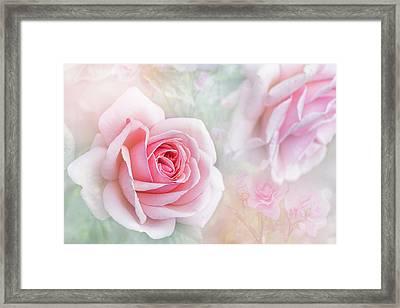 Rosa 'aphrodite' Framed Print by Jacky Parker