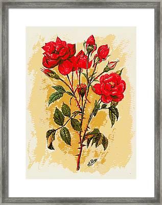 Rosa Mister Lincoln Framed Print