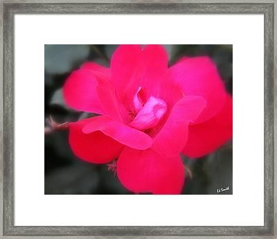 Rosa Roja Framed Print