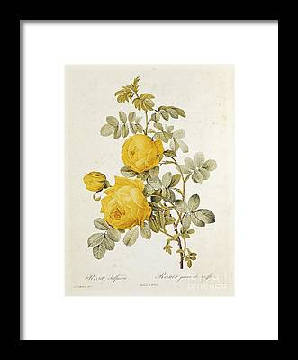 Botanical Garden Framed Prints