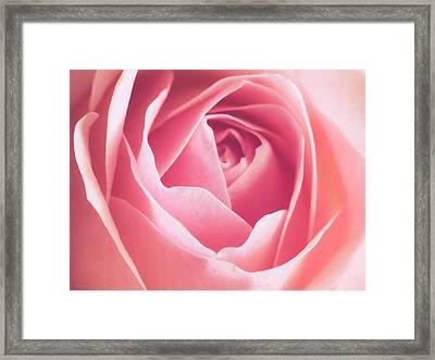 Rosa Framed Print by Wim Lanclus