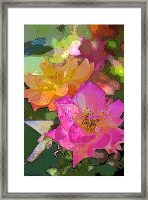 Rose 114 Framed Print by Pamela Cooper