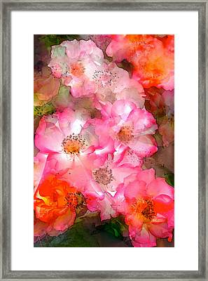 Rose 140 Framed Print by Pamela Cooper