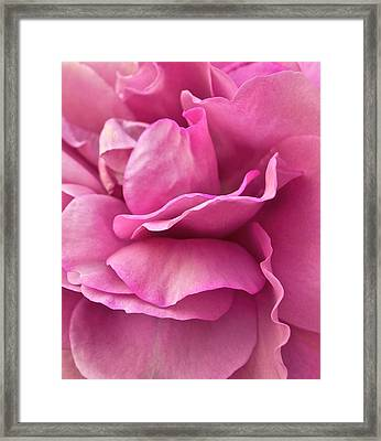 Rose Affair Framed Print