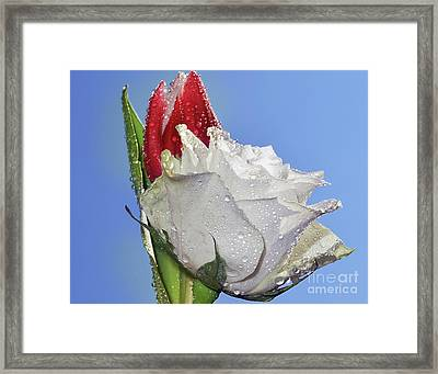 Framed Print featuring the photograph Rose And Tulip by Elvira Ladocki