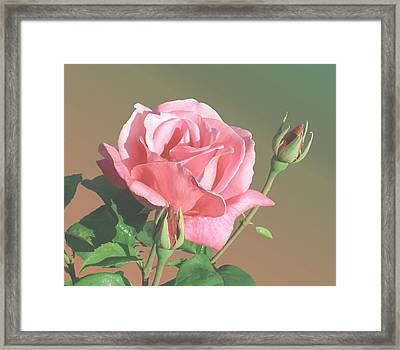 Rose And Two Buds Framed Print by Wilbur Young