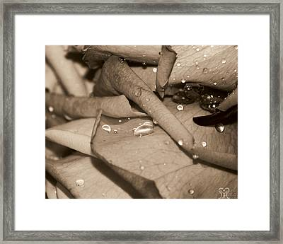 Rose And Water August Framed Print by Karen Musick