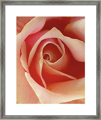 Framed Print featuring the photograph Rose by Art Shimamura