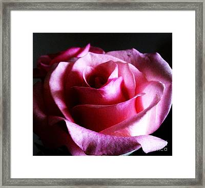 Rose At Night Framed Print