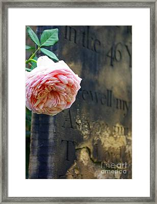 Rose At The Grave Framed Print
