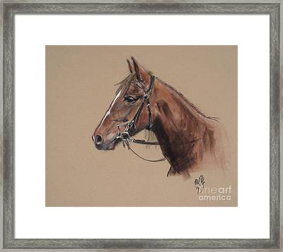 Rose At The Morgan Horse Ranch Prns Framed Print by Paul Miller